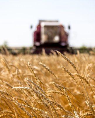 поле, комбайн, сельское хозяйство