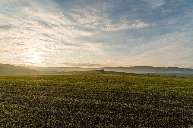 поле, посевные