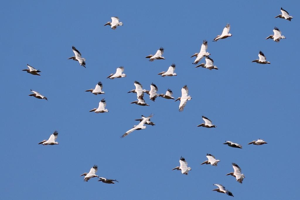 Каустик Озера Эко система Птицы