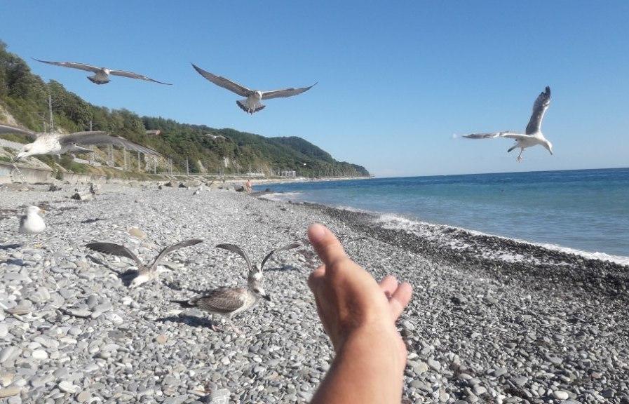 море, чайки